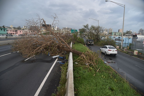 "A tree blocks a street in Santurce, in San Juan, Puerto Rico, on September 21, 2017. Puerto Rico braced for potentially calamitous flash flooding on Thursday after being pummeled by Hurricane Maria which devastated the island and knocked out the entire electricity grid. The hurricane, which Puerto Rico Governor Ricardo Rossello called ""the most devastating storm in a century,"" had battered the island of 3.4 million people after roaring ashore early Wednesday with deadly winds and heavy rain.  / AFP PHOTO / HECTOR RETAMAL"